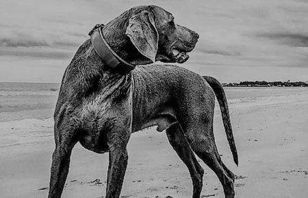 Hundehaltung mit Stil - Bequemlichkeit war gestern.
